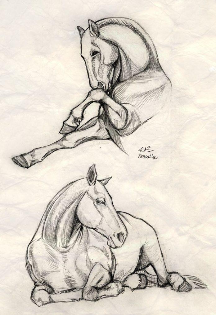 Realistic horse sketch