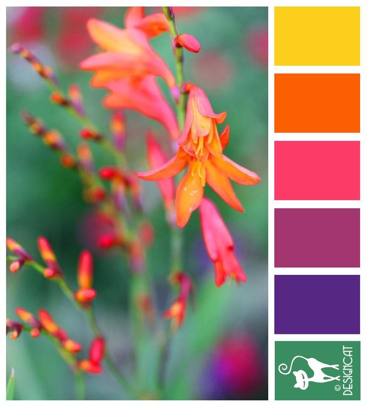 Color Inspiration Lucifer Yellow Orange Pink Purple